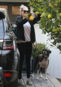 Kate Upton picks some organic lemons after her workout in Los Angeles