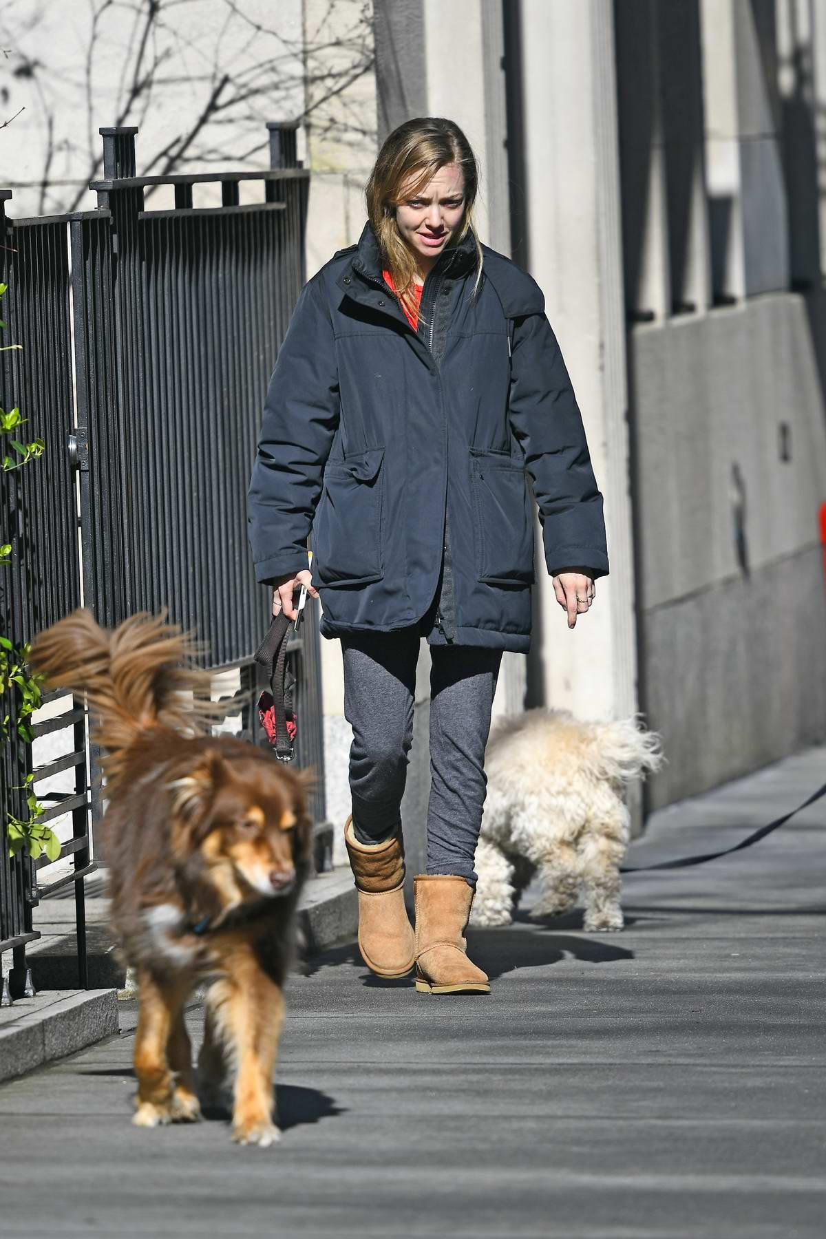 Amanda Seyfried walks her dog without a leash while texting on her cellphone in New York City