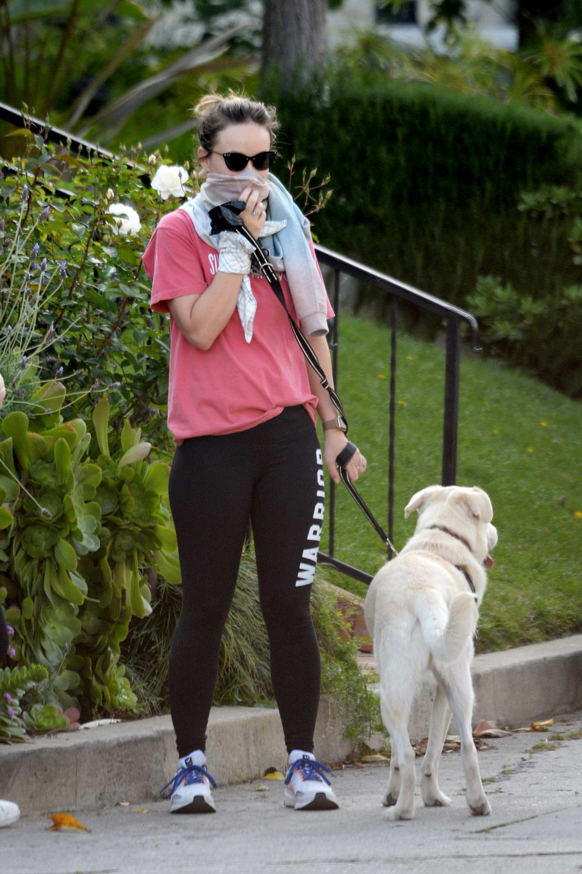 Olivia Wilde covers her face with a shirt while out for a stroll with her dog in Los Angeles