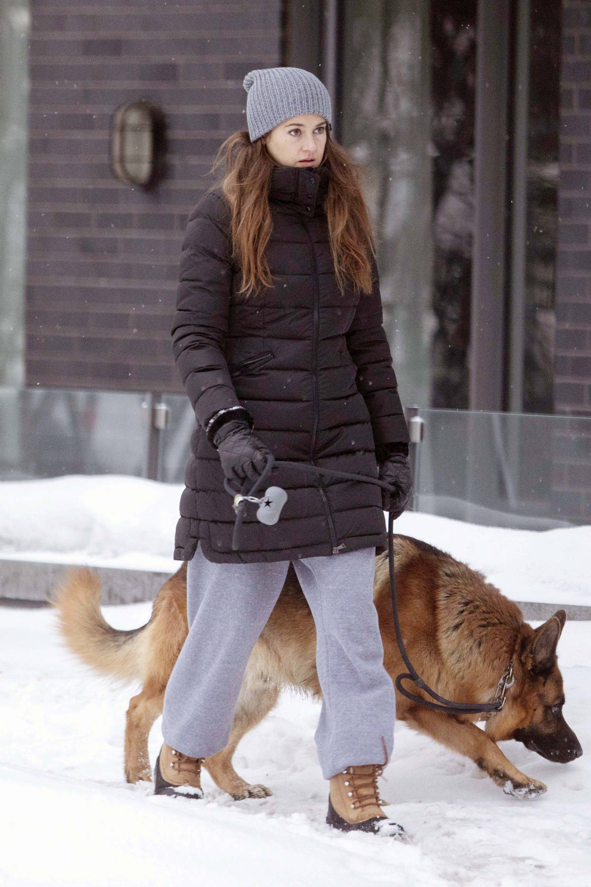 Shailene Woodley steps out in the snow to walk her dog in Montreal, Canada
